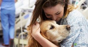 Animais de estimação visitam pacientes no hospital