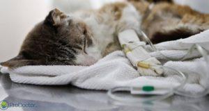 """""""Tudo pela Vida"""": 4º episódio revela rotina de veterinários em hospital público"""