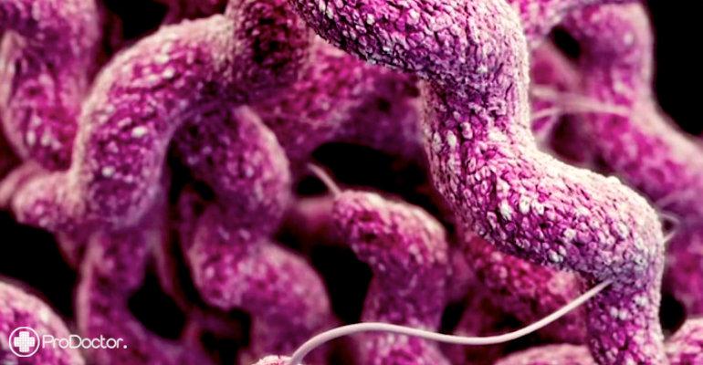 Nova classe de antibióticos se mostra capaz de combater superbactérias