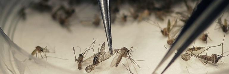 Desafios na Medicina 2018 - Permanecem mistérios sobre a zika