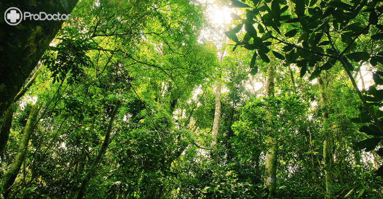 Parceria quer impulsionar a descoberta de fármacos a partir da biodiversidade